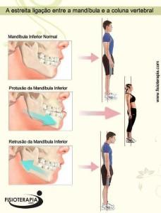mandibula_coluna